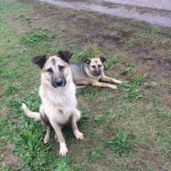 В Татарстане за информацию о жестоком убийстве собак объявлено вознаграждение