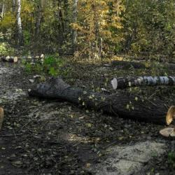 Соцсети: в Казани на улице Родина начали вырубать лес под строительство