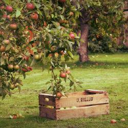 Жительница Татарстана встретила смерть в яблоневом саду