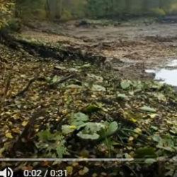 В России озеро вместе с рыбой внезапно ушло под землю (ВИДЕО)
