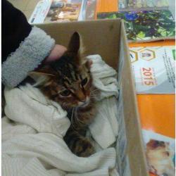В Татарстане три девочки скинули кошку с 14-го этажа, волонтеры пишут заявление в полицию (ВИДЕО)