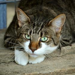 Больная бешенством кошка укусила жителя Татарстана: там сначала ввели, а потом отменили карантин