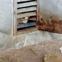 За решеткой в подвале челнинского дома погибают котята (ФОТО)