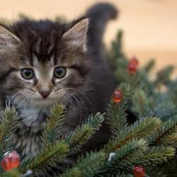 Главная новогодняя ель Казани будет в 2 раза ниже и в 3 раза дешевле