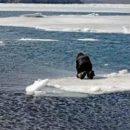Выход на лед привел к страшной трагедии в Татарстане (ВИДЕО)
