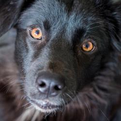 В Нижнекамске собака восстала из мертвых