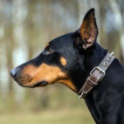 Жителю Татарстана ампутировали руку после того, как знакомый натравил на него собаку