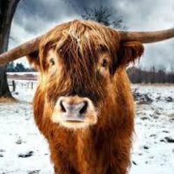 В Татарстане за убийство женщины осужден владелец быка