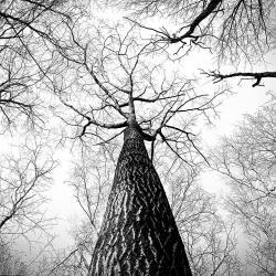 Для деревьев на даче наступает самый опасный период