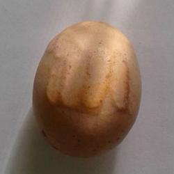В Лаишевском районе курочка снесла яйцо с надписью «Аллах», до этого хозяйка видела необычный сон (ФОТО)
