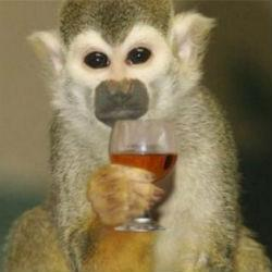 Обезьяны в казанском зоопарке спасаются от мороза чаем с лимоном
