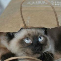 В Казани объявили кастинг для котов и кошек для съемок в рекламе (ВИДЕО)