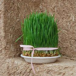 Тюркские и иранские народы сегодня встречают Новый год, а 24 марта в Казани состоится праздник Науруз