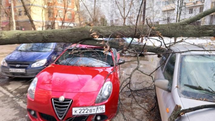 В Казани на автомобиль Alfa Romeo упало дерево (ФОТО)