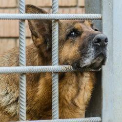 Первую в Татарстане государственную гостиницу для животных откроют в Казани за 10 млн рублей