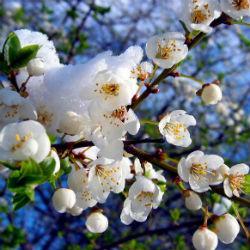 Весна продолжит удивлять: подробности о погоде в апреле и мае