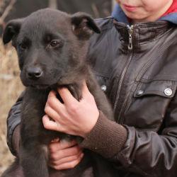 13-летний мальчик организовал приют для собак и выхаживает безнадежных животных в Татарстане
