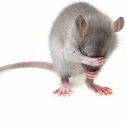 Роспотребнадзор нашел в казанском кафе тараканов и крысиный помет
