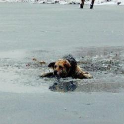 Татастанец прыгнул в ледяное озеро, чтобы спасти собаку (ВИДЕО)