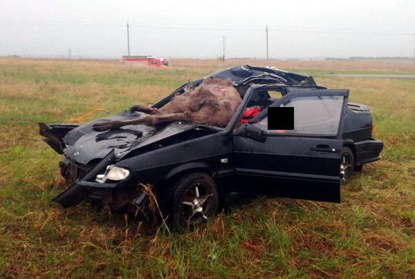 На границе с Татарстаном в столкновении с лосем погибли люди (ФОТО)