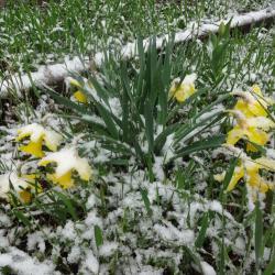 Синоптики Татарстана предупредили о резком похолодании и мокром снеге