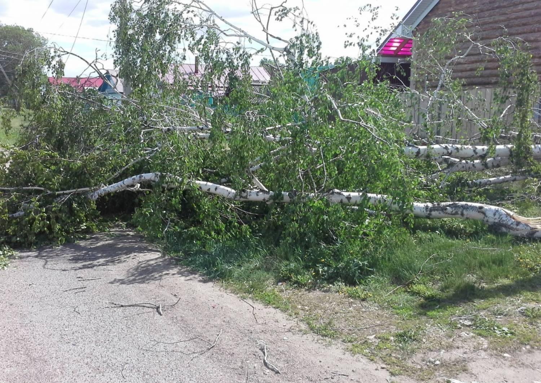 Сотни поваленных деревьев, миллионный ущерб: последствия урагана в Казани (ФОТО)