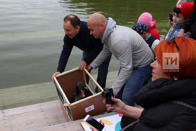 В казанском парке «Черное озеро» поселились Одиллия и Зигрфид