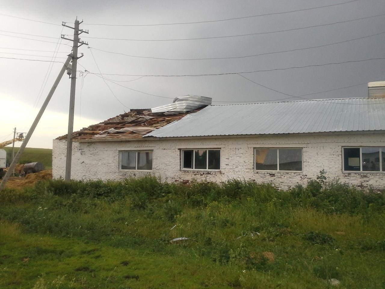 Последствия урагана: на ферме Татарстана от удара тока погибли 57 коров (ФОТО)