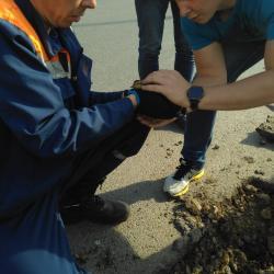 В Казани сотрудники МЧС спасли пятерых утят (ФОТО)