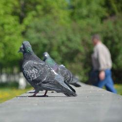 Стало известно, когда в Татарстан придет потепление