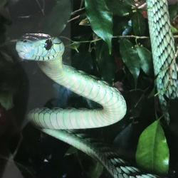 Поцелуй мамбы: врачи спасли казанца, укушенного экзотической змеей