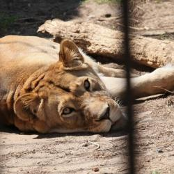 В Казани из-за жары посетителям рекомендуют приходить в зооботсад вечером