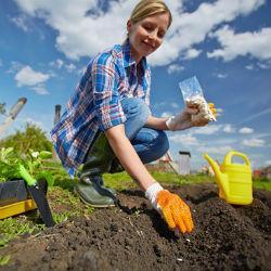 Как в жаркую погоду спасти в огороде будущий урожай