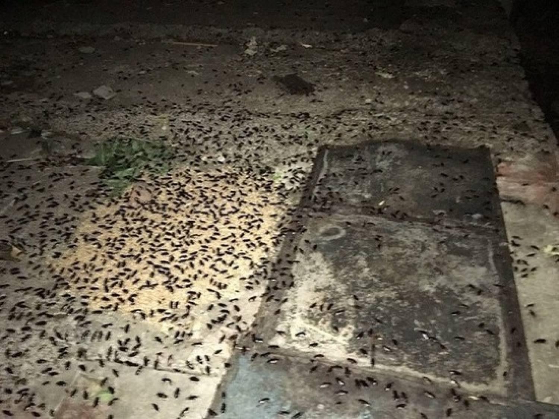 Сотни канализационных тараканов атаковали жилой дом в Казани (ФОТО)