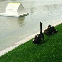 В дирекции рассказали, почему охрана не спасла Одиллию на Черном озере