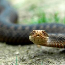 В Елабуге змеи покусали двоих человек