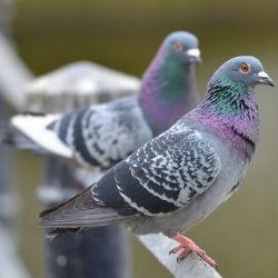 В Татарстане начали проверять птиц в дикой среде (ВИДЕО)