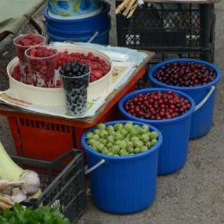 Деньги под ногами: сколько зарабатывают на ягодах и грибах челнинцы