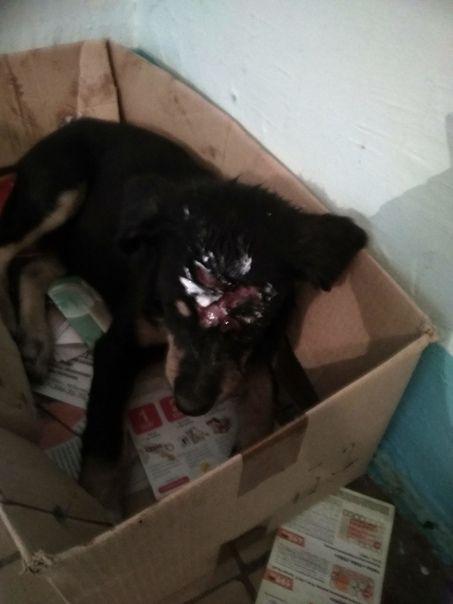 Дети в Татарстане камнем разбили голову щенку (ФОТО)