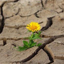 В 17 районах Татарстана из-за засухи введен режим ЧС