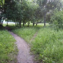 Мертвый мужчина на дереве напугал отдыхающих в парке Челнов