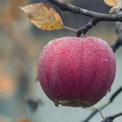 В селе Красновидово пройдет конкурс на самый вкусный компот, варенье, пироги