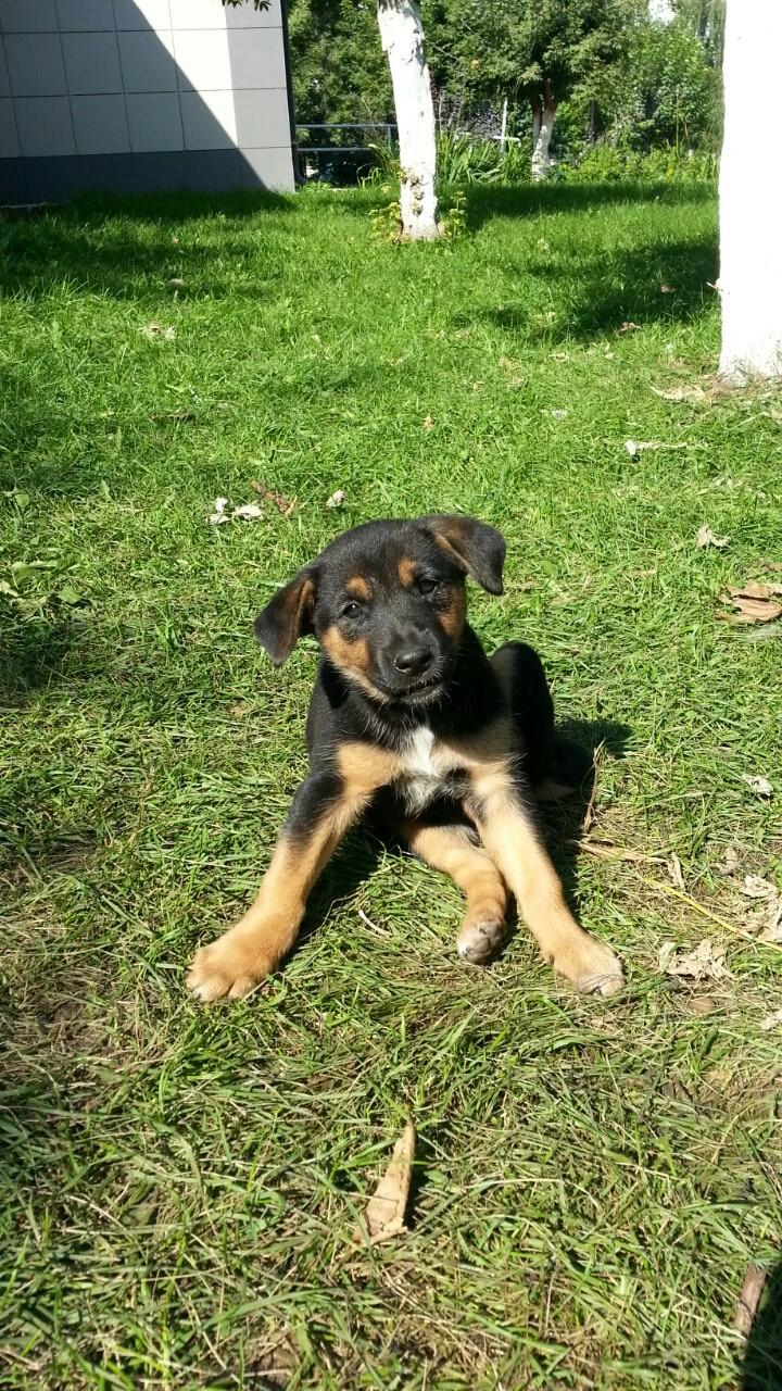 В Набережных Челнах работники кафе убили собаку и живьем закопали щенков (ФОТО)