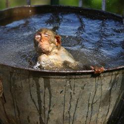 Что дешевле: принять душ или ванну (ЭКСПЕРИМЕНТ)