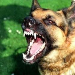 Восемь челнинцев пострадали от агрессии собак, имеющих хозяев