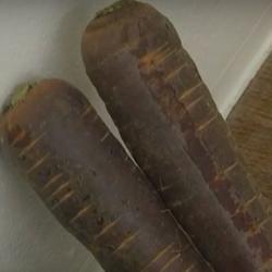 Огурдыня и морковь «Шоколадный заяц»: пенсионер вырастил экзотику в Нижнекамске (ВИДЕО)