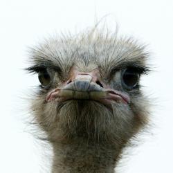 Челнинцы просят не дать ослепнуть страусу из местного зоопарка