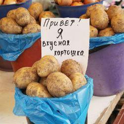 Можно ли отравиться картошкой?