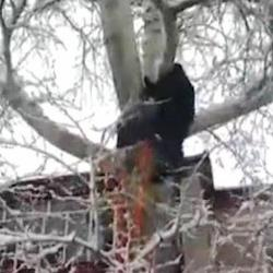 Татарстанец без страховки залез на дерево в пять этажей, чтобы спасти кота